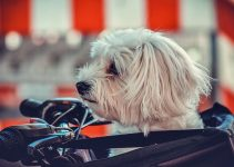 Sac transport moto pour chien
